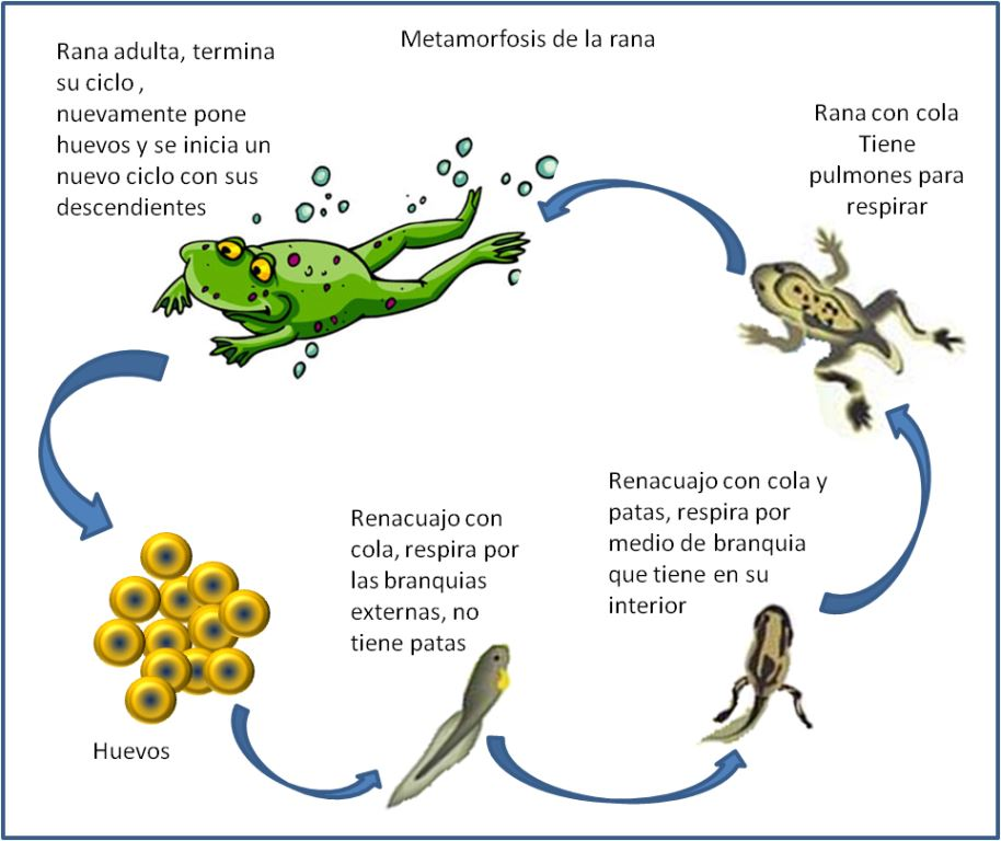 Reproducci n en animales for Reproduccion en peces